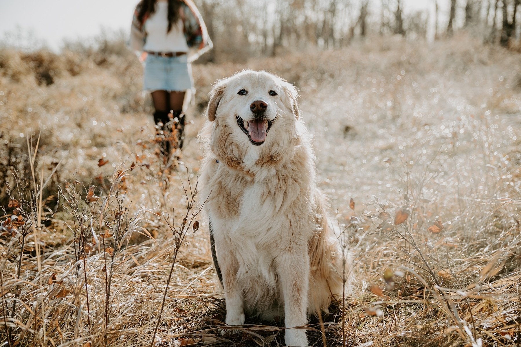 Senior dog photoshoot in Calgary